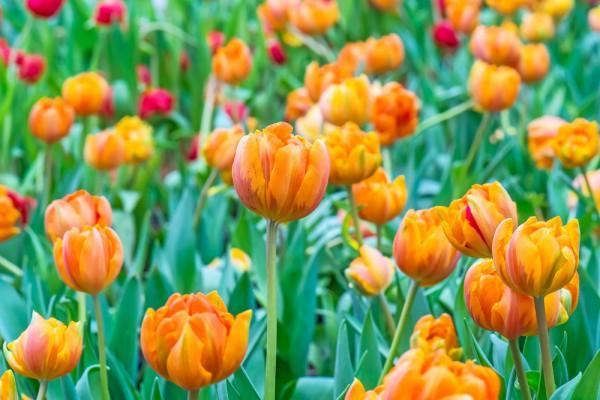 Oranje fotograferen op Koningsdag